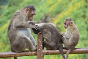 Monkey Alert: Tourists And Locals Share Wild Encounters With Monkeys