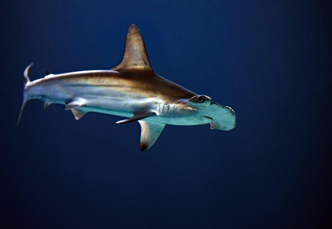 Weird Sea World: People Who Have Lived On the Ocean Share Their Strangest Encounters