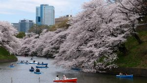 The Ultimate Guide To Visiting Tokyo: Part 2