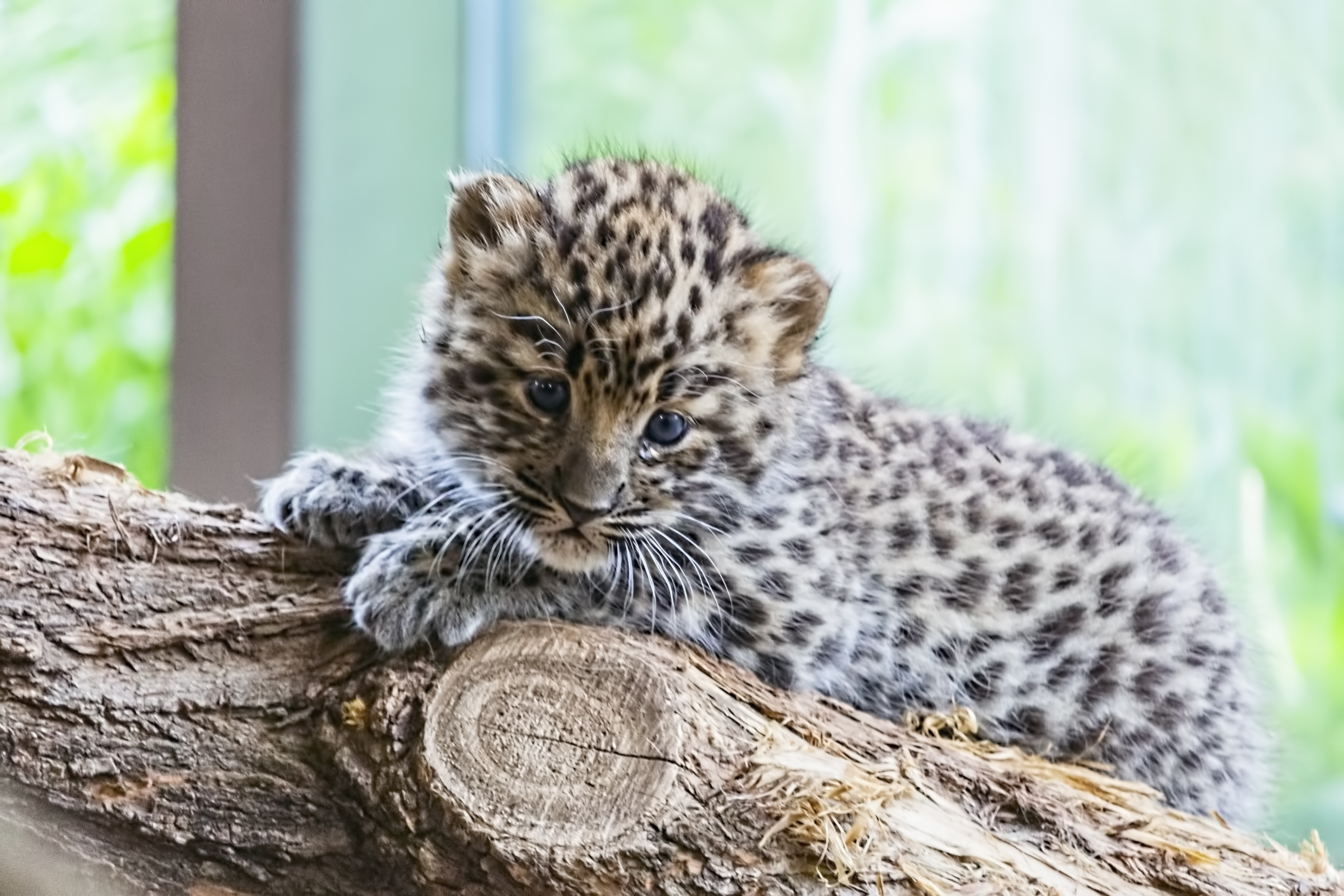 15 Of The Rarest Animals In The World