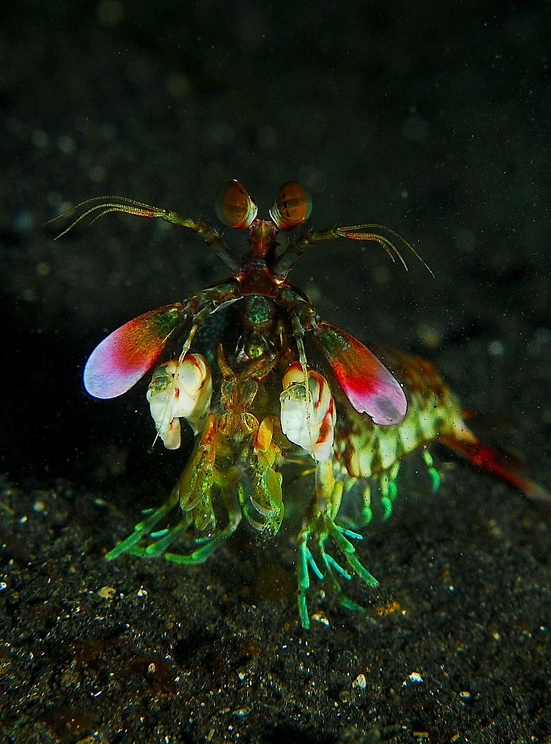 40 Animals From Around The World That Look Like Aliens