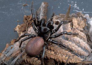 Australia's Most Dangerous Animals, Ranked