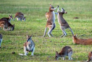 Australia's Most Dangerous Animals, Ranked