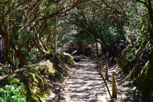 Rural de Anaga Park, Tenerife