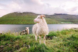 direct flights to the Faroe Islands